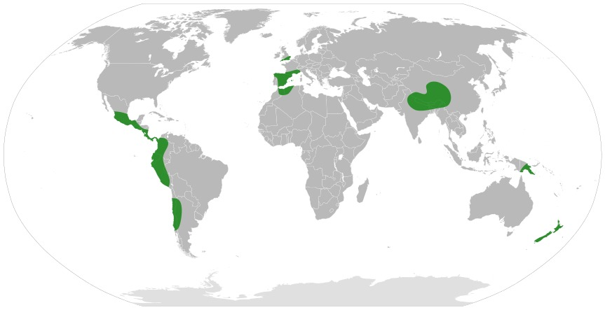 Map of Coriariaceae