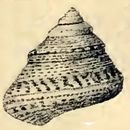 Image of <i>Calliostoma laugieri</i> (Payraudeau 1826)