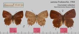Image of <i>Surendra vivarna</i> (Hewitson 1862)