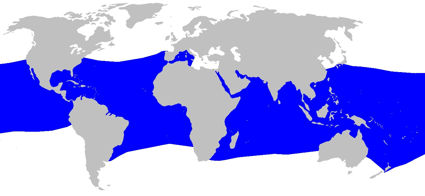 Map of Bigeye Thresher Shark