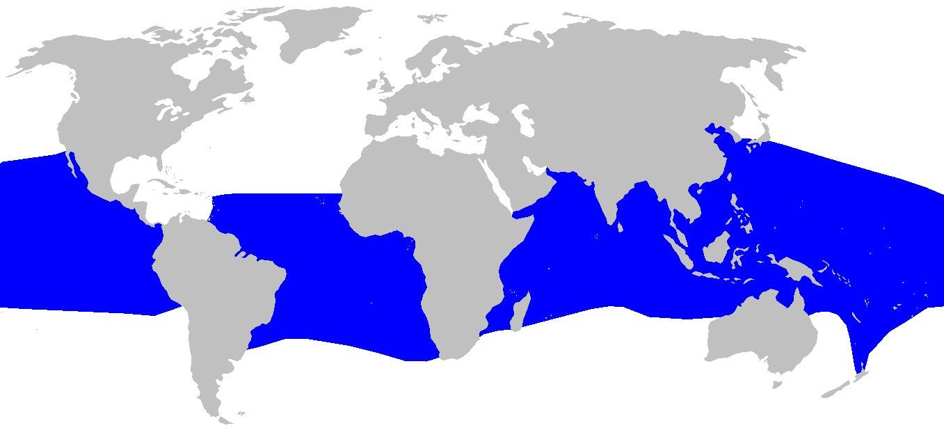 Image of Crocodile Shark
