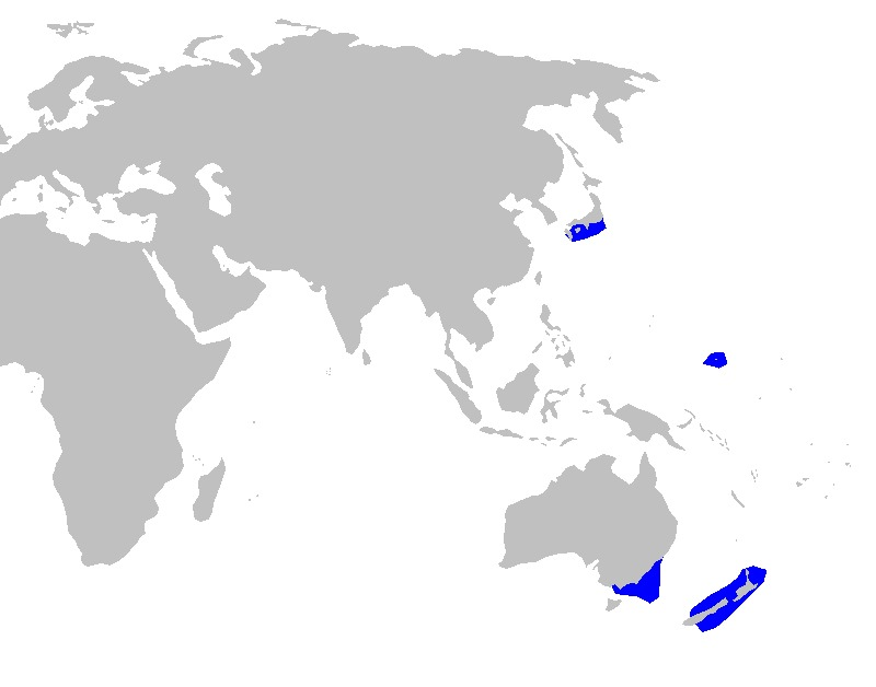 Map of Mandarin Shark