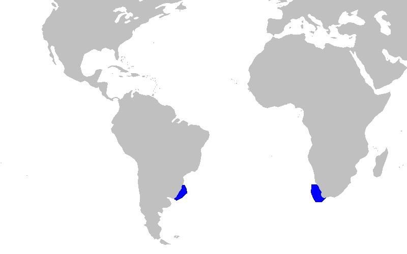 Image of Taillight Shark
