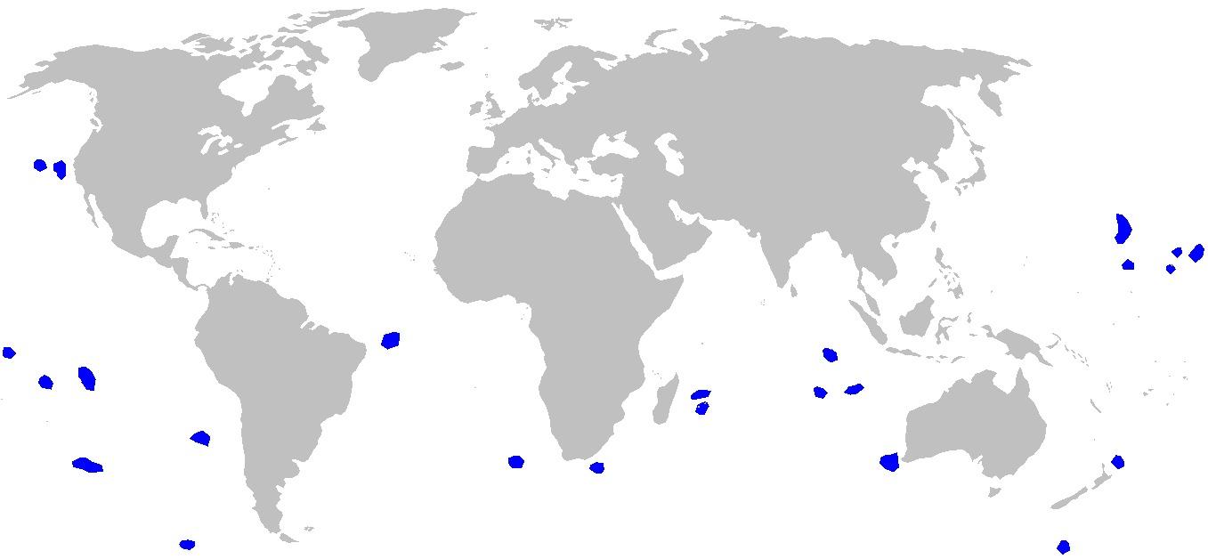 Image of Pygmy Shark