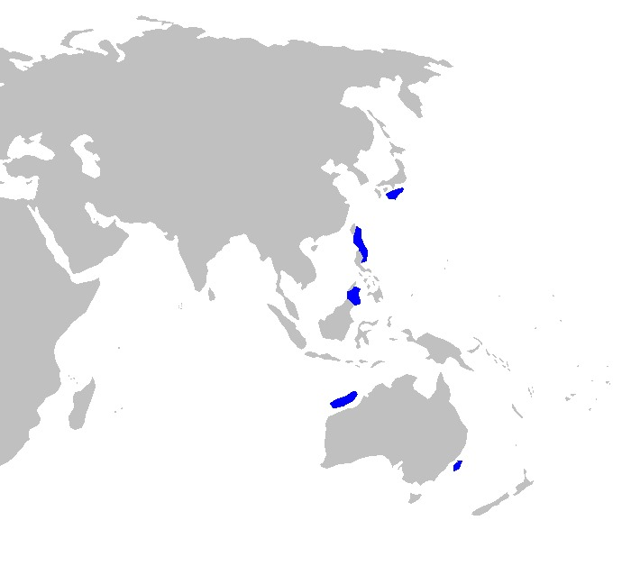 Image of Smalleye Pygmy Shark