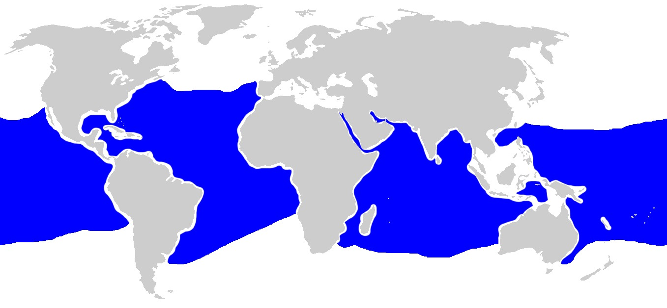 "<span class=""translation_missing"" title=""translation missing: en.medium.untitled.map_image_of, page_name: Oceanic Whitetip Shark"">Map Image Of</span>"