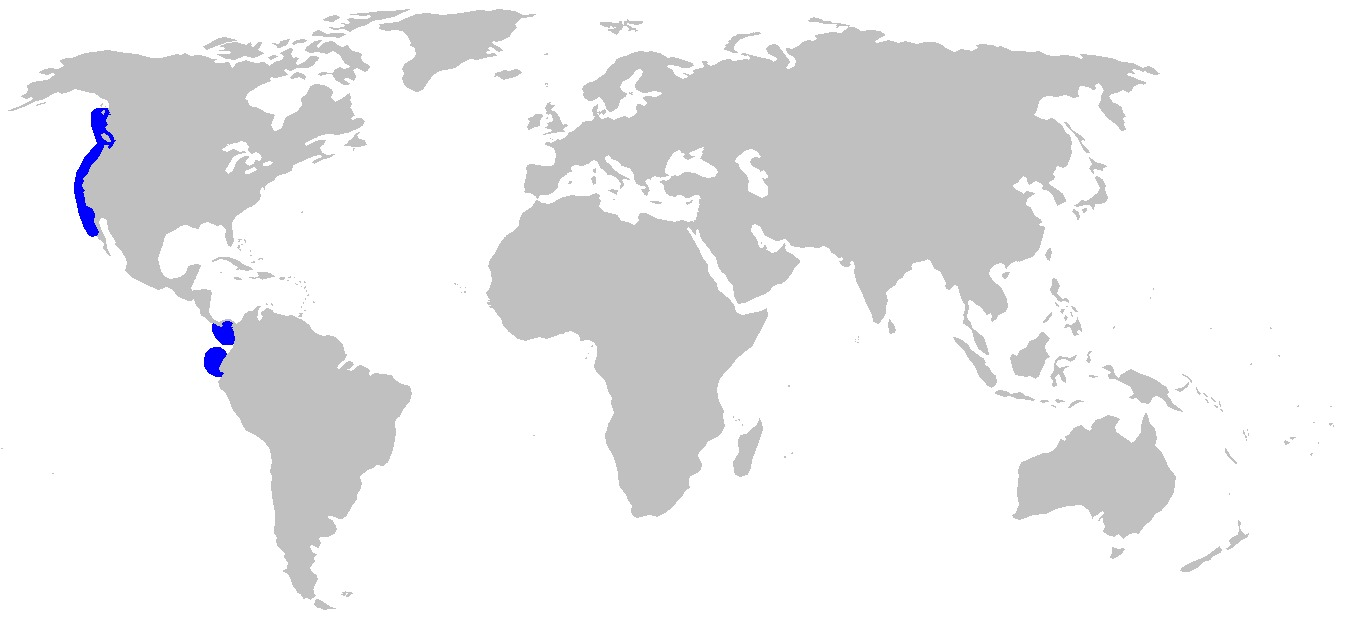 Map of Brown Catshark