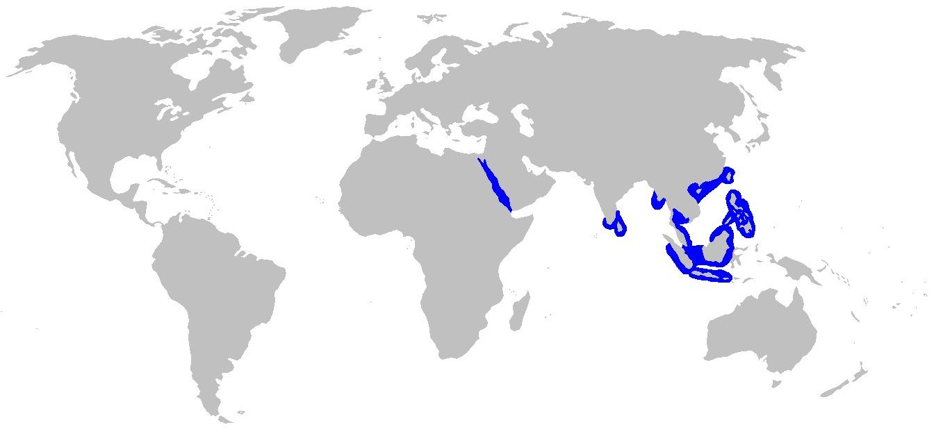 Image of Sickelfin Weasel Shark