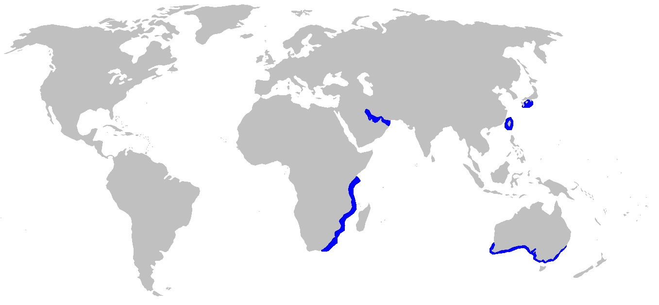 Map of Blacktip Topeshark