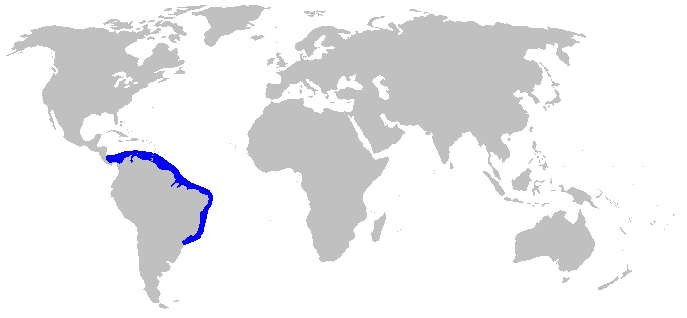 "<span class=""translation_missing"" title=""translation missing: en.medium.untitled.map_image_of, page_name: Brazilian Sharpnose Shark"">Map Image Of</span>"