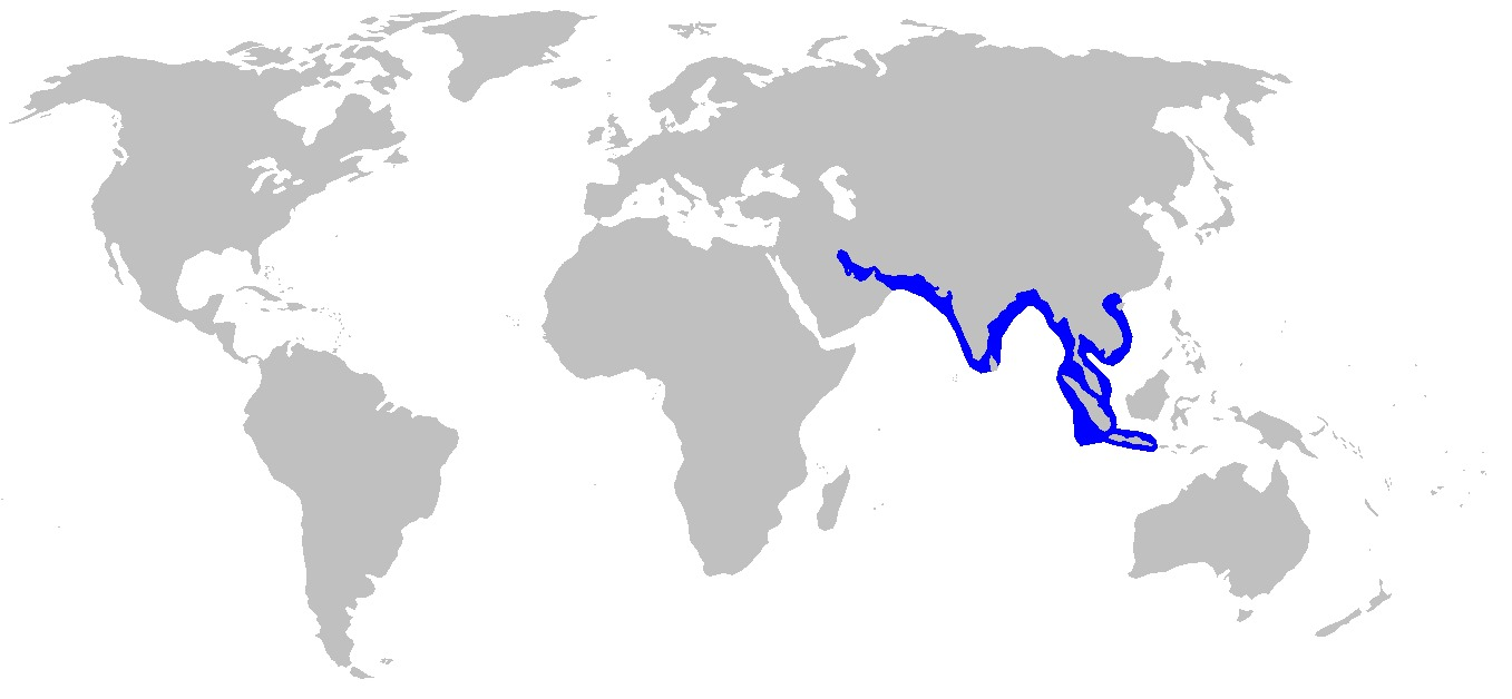 Map of Grey Sharpnose Shark
