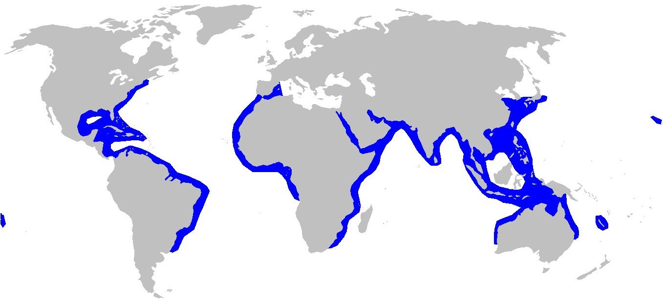 Map of Scalloped Hammerhead