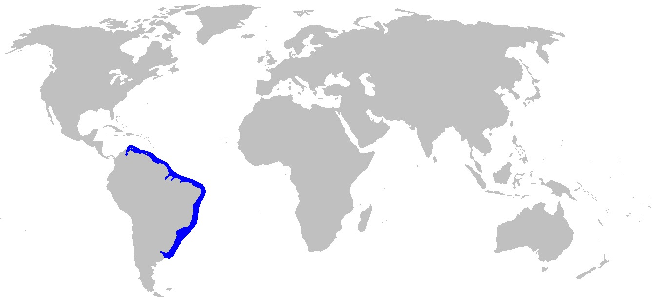 Map of Curry Shark