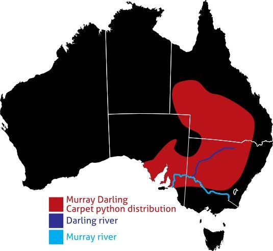 Map of <i>Morelia mippughae</i>