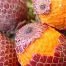 Image of Moriche Palm