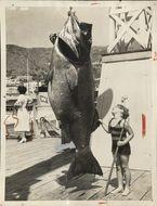 Image of Black Sea Bass