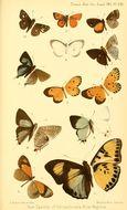 Image of <i>Aphnaeus brahami</i> Lathy 1903