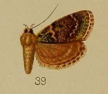 Image of <i>Lepidogma chlorophilalis</i> Hampson 1912