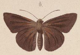 Image of <i>Mimene miltias</i> Kirsch 1876
