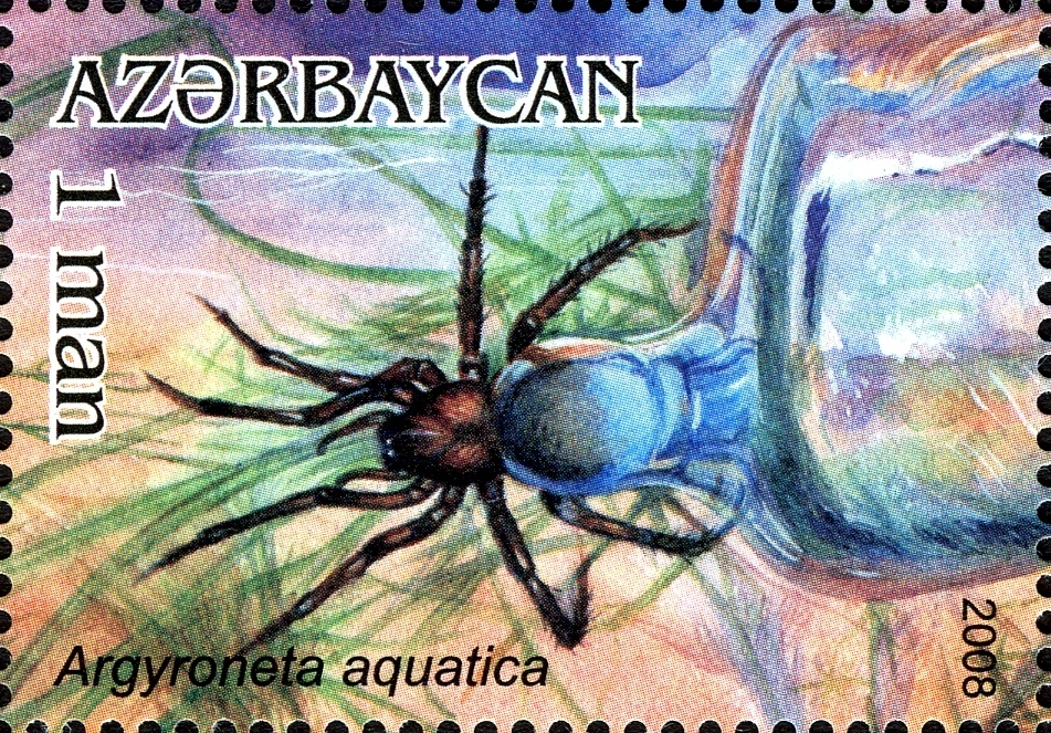 Image of Diving bell spider