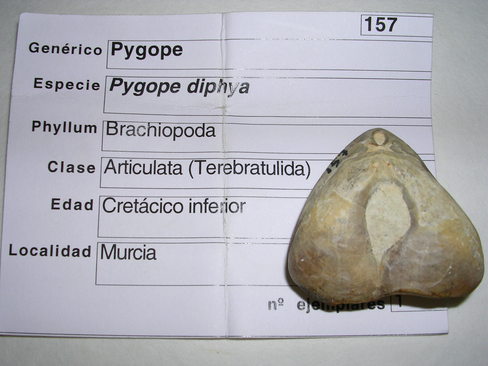 Image of Pygope