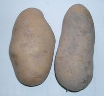 Image of Irish potato