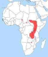 "<span class=""translation_missing"" title=""translation missing: en.medium.untitled.map_image_of, page_name: shoebills"">Map Image Of</span>"