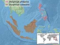 Image of Dryophiops