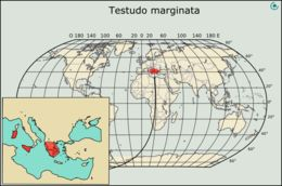 "<span class=""translation_missing"" title=""translation missing: en.medium.untitled.map_image_of, page_name: Marginated Tortoise"">Map Image Of</span>"