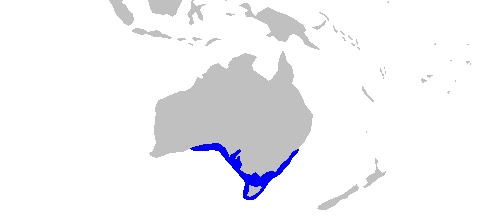 "<span class=""translation_missing"" title=""translation missing: en.medium.untitled.map_image_of, page_name: Tasmanian Numbfish"">Map Image Of</span>"