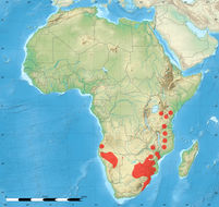"<span class=""translation_missing"" title=""translation missing: fi.medium.untitled.map_image_of, page_name: &lt;i&gt;Spirostachys africana&lt;/i&gt; Sond."">Map Image Of</span>"