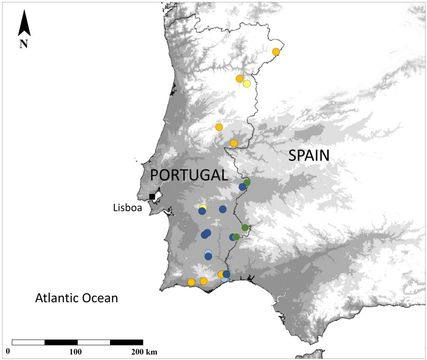 "<span class=""translation_missing"" title=""translation missing: en.medium.untitled.map_image_of, page_name: Giant African Mantis"">Map Image Of</span>"