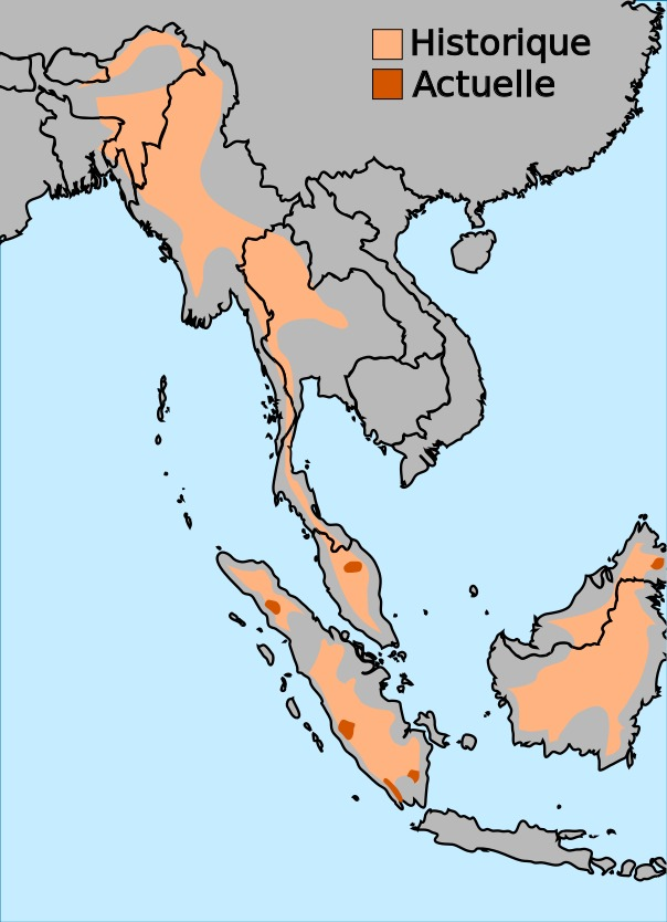 Map of Hairy Rhinoceros