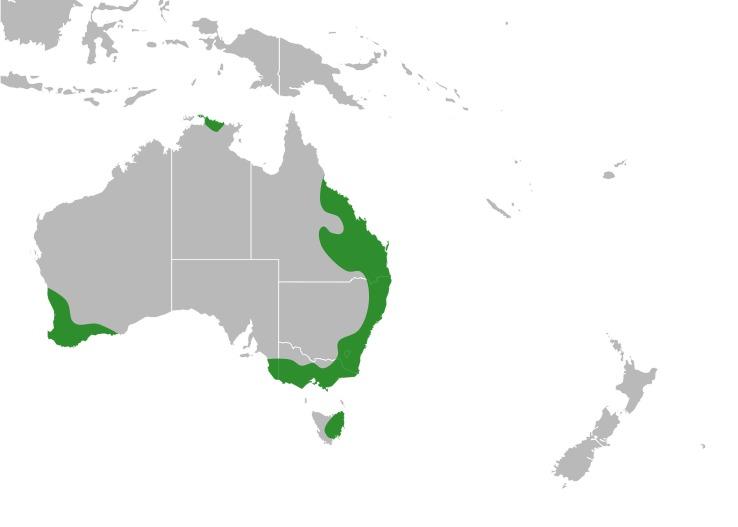 Map of purple pea
