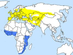 Map of Eurasian nightjar