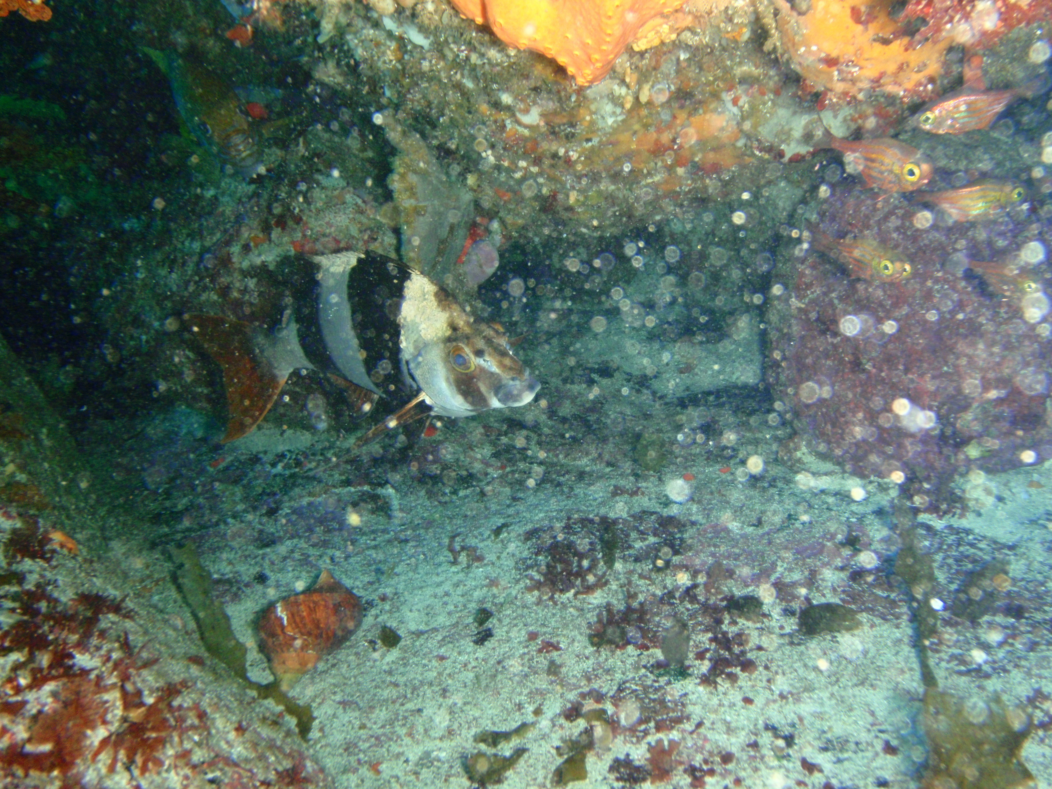 Image of Magpie perch