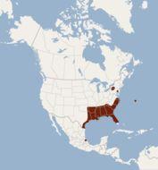 Map of Seminole Bat