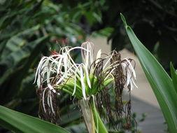 Image of poisonbulb