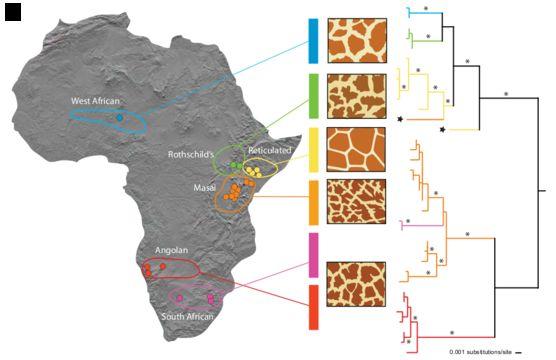 "<span class=""translation_missing"" title=""translation missing: en.medium.untitled.map_image_of, page_name: Giraffe"">Map Image Of</span>"