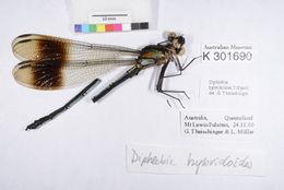 Image of <i>Diphlebia hybridoides</i> Tillyard 1912
