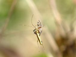 Image of Freeloader flies