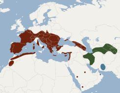 "<span class=""translation_missing"" title=""translation missing: en.medium.untitled.map_image_of, page_name: Geoffroy&#39;s Bat"">Map Image Of</span>"