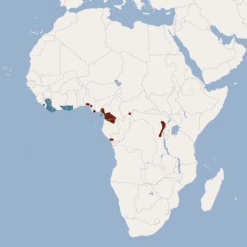 "<span class=""translation_missing"" title=""translation missing: en.medium.untitled.map_image_of, page_name: Zenker&#39;s Fruit Bat"">Map Image Of</span>"