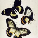 Image of <i>Papilio tydeus</i> Felder & Felder 1860
