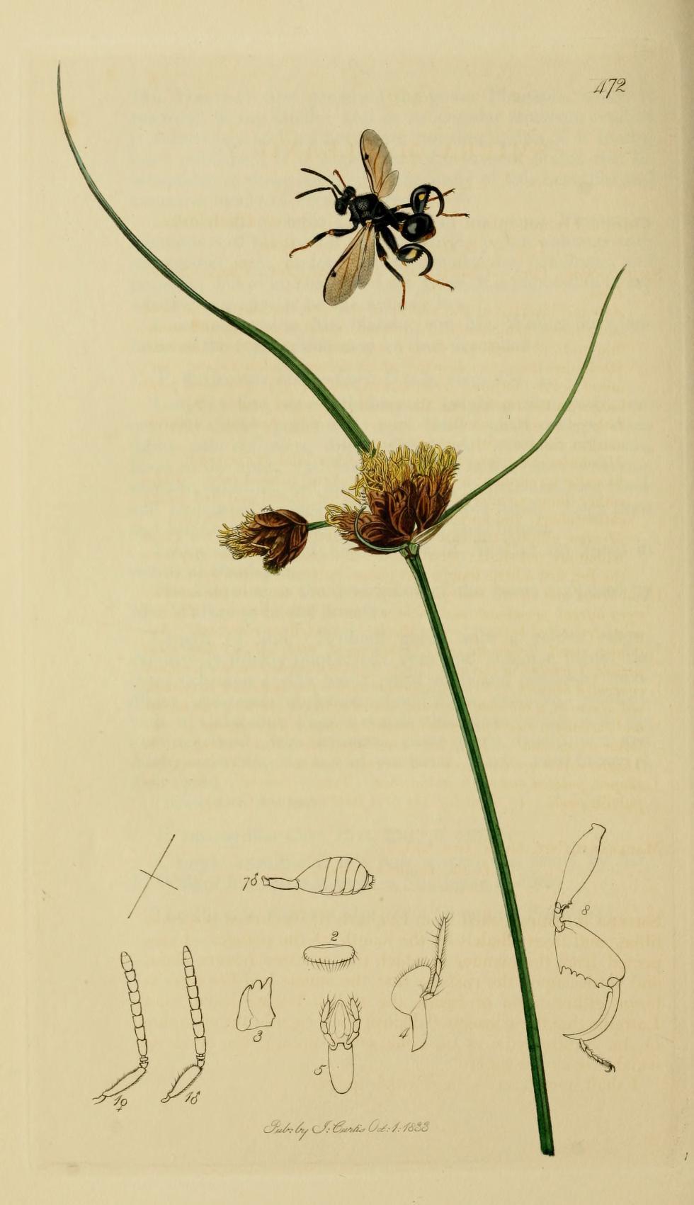 Image of Chalcis