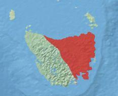 Image of Tasmanian bettong