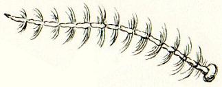 Image of Glassworm