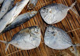 Image of Moonfish