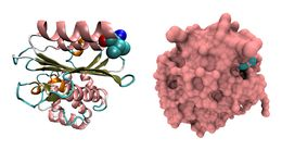 Image of Citrobacter
