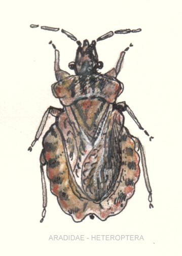 Image of flat bugs
